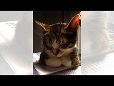 Cats - YouTube