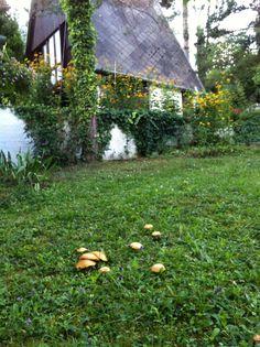 Vargánya a kertünkben