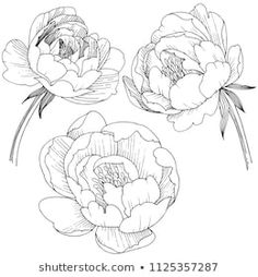 Similar Images, Stock Photos & Vectors of drawing anemone flowers illustration vector and clip-art. - 619695716 - Similar Images, Stock Photos & Vectors of Drawing Anemone Flowers Illustration Vector Clipart – 6 - Peony Drawing, Peony Painting, Floral Drawing, Watercolor Flowers, Flower Art Drawing, Drawing Step, Watercolor Texture, Watercolor Background, Watercolor Art