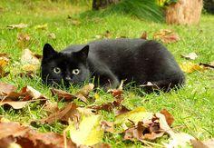 10 2013 (1667)k by dagmarra on Flickr.cat
