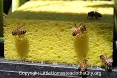 Preventing bees drowning in their drinking water by delores