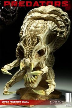 Super Predator Skull Prop Replica from Predators. It is made by EFX and is approximately 45 cm (17.7 in) high http://alien-predator.minimodelfilmstuff.co.uk/alien-predator/predators-super-predator-skull-prop-replica-efx-400062 A warrior race of alien creatures known as Predators travel to Earth to abduct a group of humans, all ruthless killers, and deposit them on a dangerous jungle planet that serves as their game preserve. Banding together, the humans soon realize that they ...
