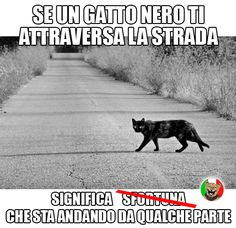 Gatti neri e sfortuna