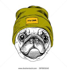 Portrait of the Pug in a hipster hat. Vector illustration.