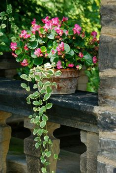 Potted begonias on the tea house railing. You can see the cut-marks on the stones, as though they are still fresh from the quarry. ~WMG