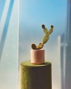 Plant still life. www.jimmymarble.com