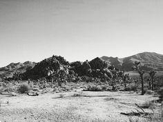 Joshua Tree Nationalpark California Desert Roadtrip