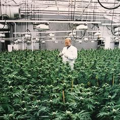 Always been a huge fan of Paleontology, lets see who can reach this level.. http://smokeweedblog.com/how-to-grow-cannabis-indoors/