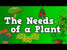 Most Popular Teaching Resources: The Needs of a Plant (song for kids about 5 things...