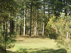Sherwood Forest, England