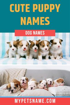 It is only natural that you want your puppy's name to be as adorable and cute as possible. There are plenty of ways to make sure their name is as lovable as their personality. Check out our list of cute puppy names for inspiration.  #cutepuppynames #puppynames #cutenamesforapuppy Cute Puppy Names, Dog Names, Cute Puppies, Personality, Teddy Bear, Pets, Natural, Check, Animals