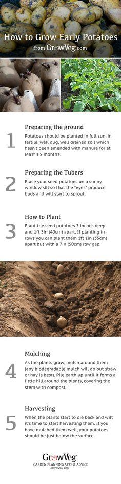Deep Mulch Gardening , 389 Best Munity Gardens Images On Pinterest In 2018