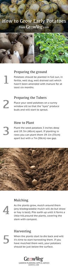 Everything that you need to know to grow successful early potatoes from growveg.com