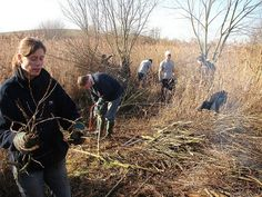 Sussex Wildlife Trust volunteers helping to conserve a reedbed World Wetlands Day, Nature Reserve, Volunteers, Conservation, Trust, Wildlife, Digital, Canning