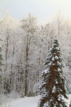 Winter Scene. Deep River, Ontario