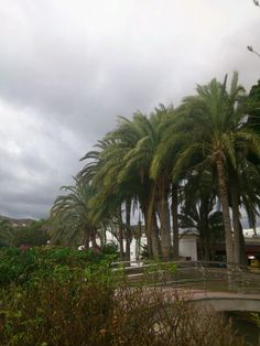 Clouds over palm trees in the park. Puerto Rico, Gran Canaria, Spain.