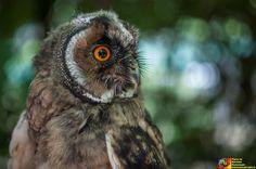 #rapace #natura #occhi