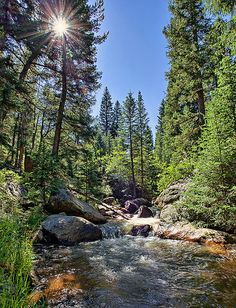 early summer, Fourmile Creek, Dome Rock State Wildlife Area, Teller County, Colorado