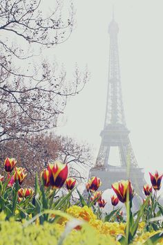 Solid-Faced Canvas Print Wall Art Print entitled Tulips flowers with Eiffel Tower background, Paris, France Paris In Spring, Springtime In Paris, Paris 3, Louvre Paris, I Love Paris, Spring Day, Paris City, Spring Fever, Torre Eiffel Paris