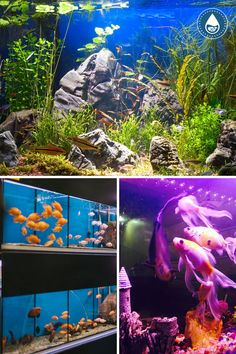 Celebrities are just like us in most ways. Sure, they have more luxuries than most of us do, but they also have normal items, such as fish tanks. Yeah, these are probably going to be bigger, better, and more expensive, but they still have them. Cool Fish Tanks, Aquarium Design, Design Ideas, Celebrities, Awesome, Pictures, Animals, Photos, Celebs