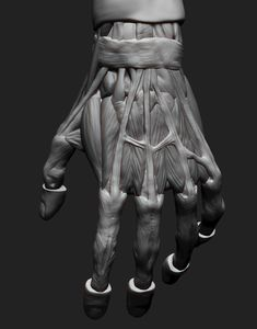 ArtStation - Arm Anatomy In Depth, Alex Halcescu