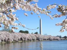 Washington DC in the springtime