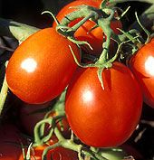 14 Tomato Plants To Try | Heirloom Grape Cherry