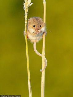 hang in there, little fella!!! SOOOO CUTE!!!! :)