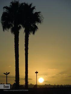 sunset by jualop  airport california jualop palm san diego sun sunset tree usa jualop
