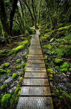 I love boardwalks Enchanted Forest, Cradle Mountain, Tasmania Foto Nature, All Nature, Oh The Places You'll Go, Places To Travel, Places To Visit, Travel Destinations, Australia Travel, The Great Outdoors, Wonders Of The World