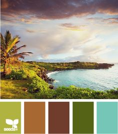 Previous pinner states: Tropical color palette for my pre-teen son's bedroom. He loves Florida so bringing these colors to his room should be fun. -- someone could bring them to my bedroom too!  :)