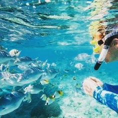 Some of the best snorkeling and diving can be enjoyed in #Fiji. #Diving #Scuba #Watersport #Clearwater #Swim