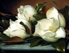 TWO MAGNOLIAS FLOWERS BLUE CLOTH 1885 PAINTING BY MARTIN JOHNSON HEADE REPRO