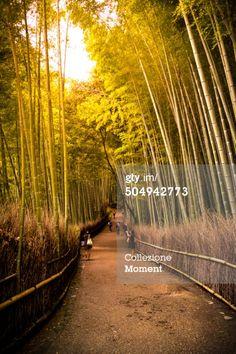 #BambooForest. #Arashiyama, #Japan.