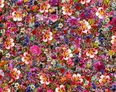 Psychedelic Columbine Flower Photo Collage - Massive Flower Photo Collage - Thousands of Flowers in One Image - New Soul Amp Song Flower Photo Collage, Flower Photos, Flower Crown Drawing, Flower Art, Plant Wallpaper, Cool Wallpaper, Columbine Flor, Natural Beauty Remedies, Herbal Remedies