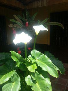 Flor de lirios blancos