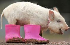 pig boots in PINK