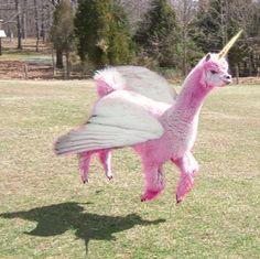 Flying pink uni-llama