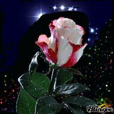 As rosas são provavelmente a mais antiga flor a ser cultivada, estiveram presentes no antigo Egipto, nas culturas helénicas, na Roma Antiga, na Europa medieval. Monges nos mosteiros usaram a rosa para fins terapêuticos, e hoje em dia a rosa vermelha é um símbolo universal do amor.Ainda hoje, diz-se que o aroma das rosas é sinal de santidade, ou que sentir o aroma de rosas sem que hajam rosas por perto, é sinal da presença de um espírito de luz junto de nos.