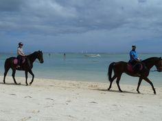 Mauritius, horses, beach, holiday