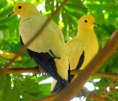 Yellow Birds Perching -