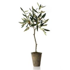 Found it at Wayfair - French Market Olive Tree in Pot http://www.wayfair.com/daily-sales/p/Branching-Out%3A-Artificial-Plants-%26-Trees-French-Market-Olive-Tree-in-Pot~QXN1258~E19588.html?refid=SBP.rBAZEVVFTZkQ5nTCsgKrAqvZ4QJNV0cpq3zR-lOIapw