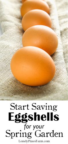 Start Saving Eggshells for Your Spring Garden Best Picture For DIY Edible school supplies For Your Taste You are looking for something, and it is going to tel Egg Shells In Garden, Organic Gardening Tips, Sustainable Gardening, Gardening Hacks, Vegetable Gardening, New Roots, Edible Plants, Grow Your Own Food, Growing Vegetables