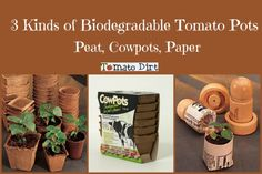 3 biodegradable pots to use when starting tomato seeds. More helpful seed starting info: http://www.tomatodirt.com/grow-tomatoes-from-seeds.html
