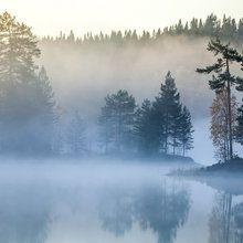 Fototapeta - Norwegian Mist