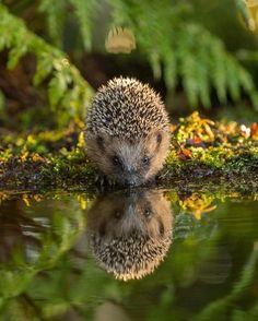 Reflection Photo by Jan Dolfing