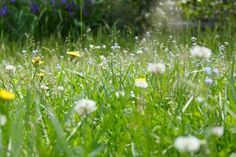 Ah, the scent of freshly mowed grass. And... lawn mower noise, grass allergies, proliferation of chemical fertilizers, obscene water consumption, and continual war with lawn intruders (of the