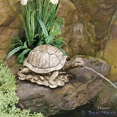 Beckett Turtle Pond Spitter Package