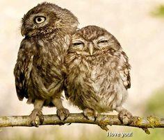 Adorable Owls!!!!