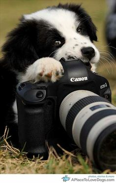 The puppy photographer ~ so cute :)